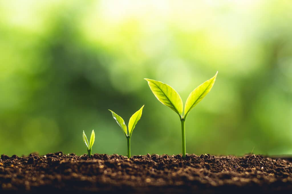 Groeiende planten uit de aarde